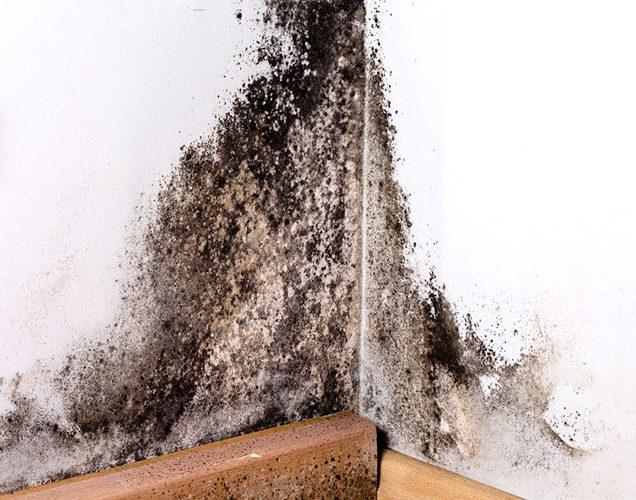 CGS-waterproofing-mold1c